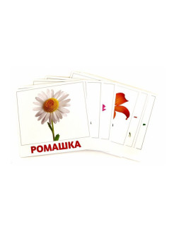 Set of cards Агабум